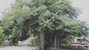 Yogyakarta - 5