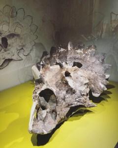 5 Drumheller - Royal Tyrrell Museum 13