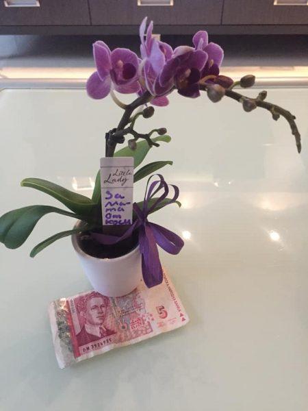 История за орхидея и 5 лева