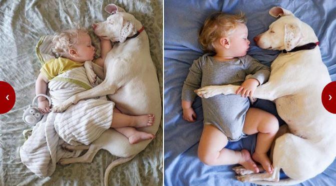 Връзката между бебетата и животните