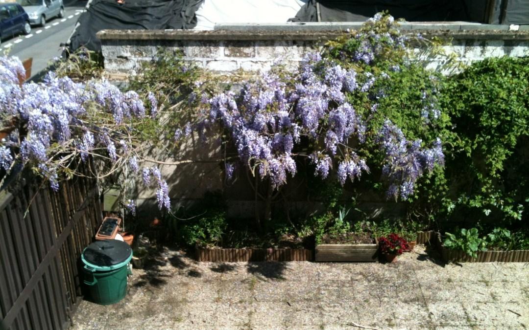 Dans mon jardin…