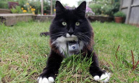 Horizon: The Secret Life of the Cats