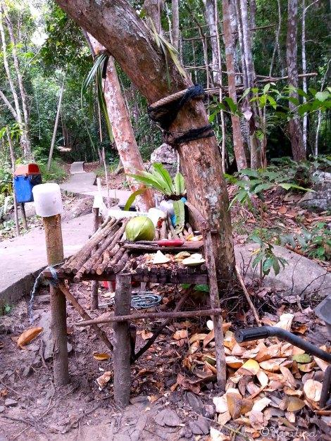 Coconut Café