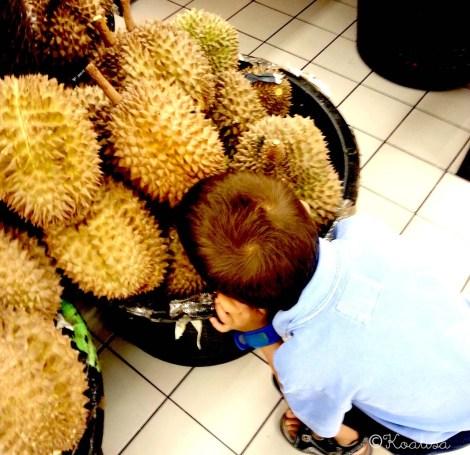 durian canaillou2