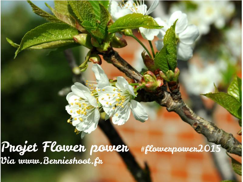 Flower Power 2015 #2