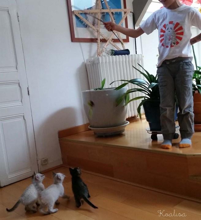 chatons 3