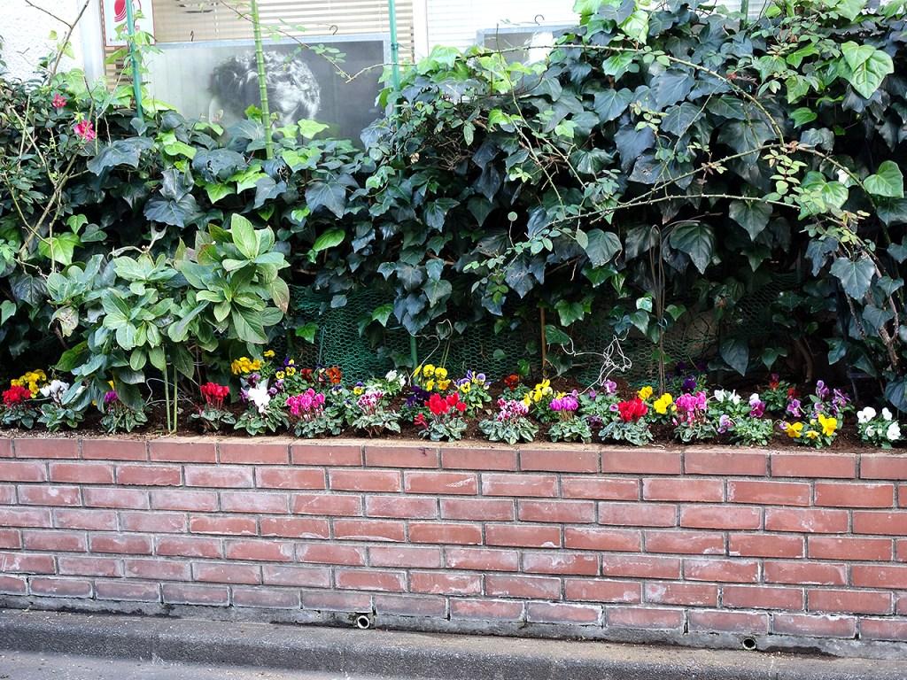 花壇の植え替え