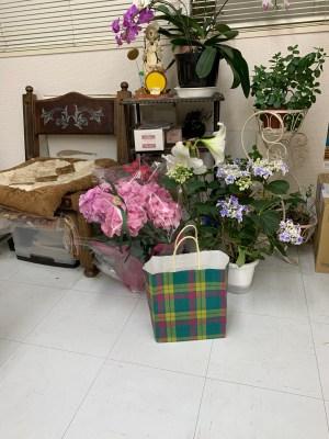 高円寺駅近美容室のアマリリス、アジサイ