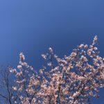 3月、早咲き
