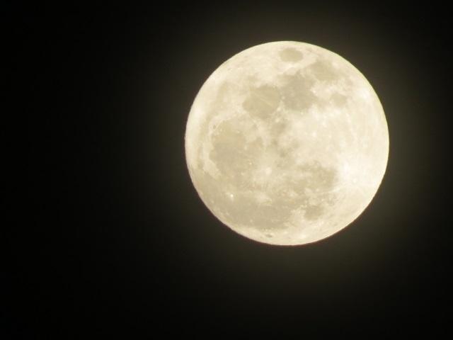 映画『君は月夜に光り輝く』のフル動画を無料視聴!感想やあらすじも