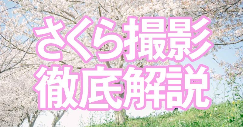 桜前撮り徹底解説