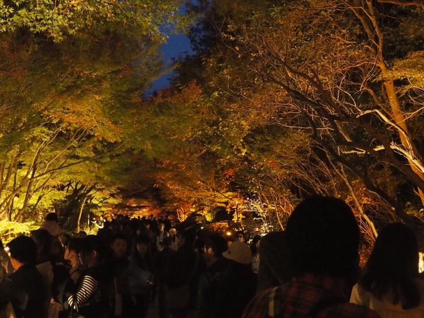 Higashiyama Zoo Momiji