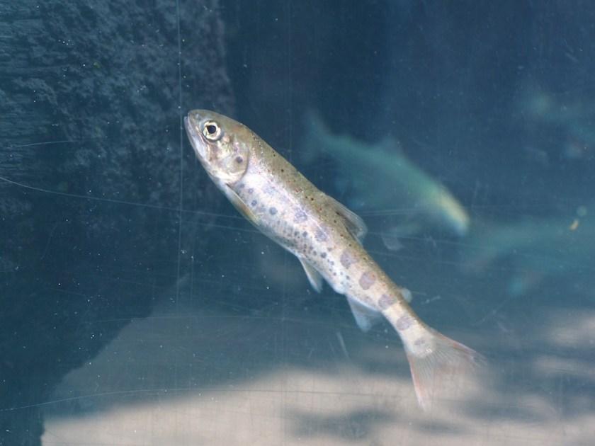 Aquatotto Gifu