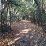 動物が見られるかも?東山一万歩コースを歩いてみました 2016.12.18(Sun)
