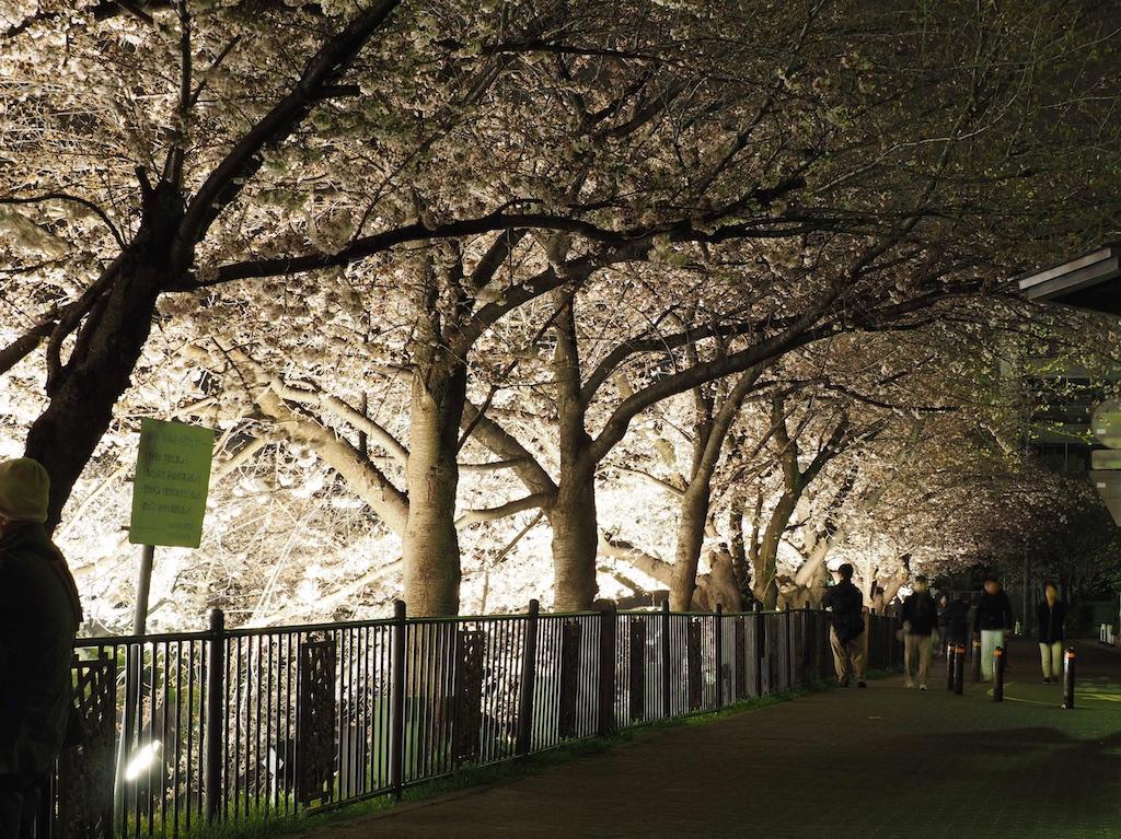 Yamazaki River Cherry Blossoms