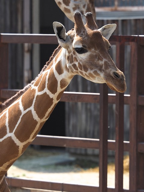 Tobu Zoo Kemono Friends