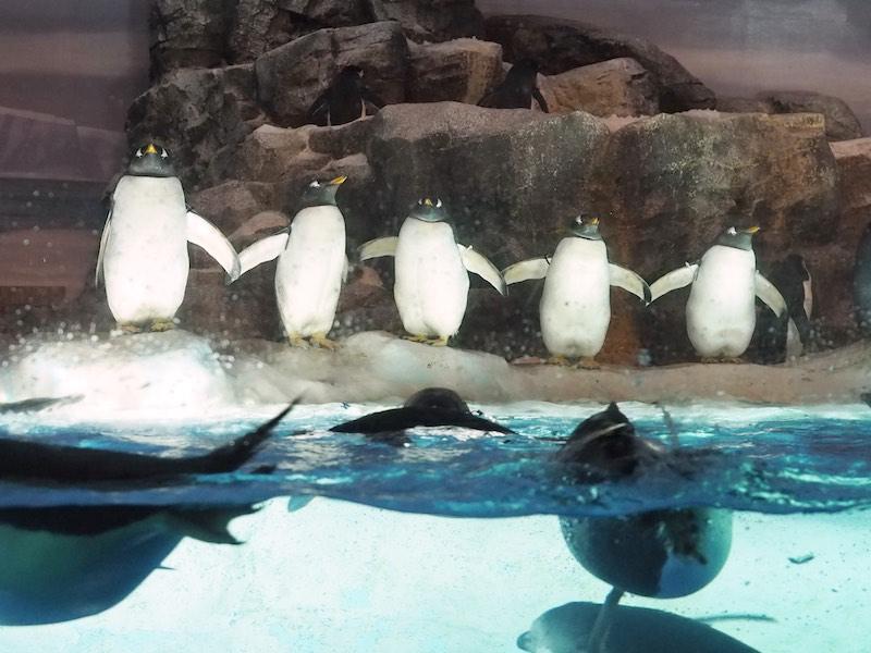 Penguin Nagoya