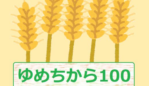 ゆめちから100とは?国産の超強力小麦粉の特徴が知りたい!