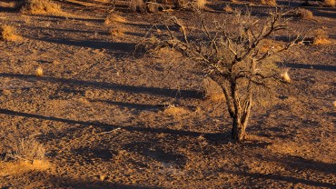 Sonnenaufgang über der Namibwüste