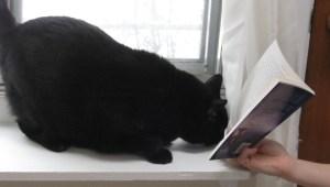 Kizzy loves books