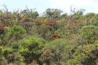 Der Wald auf den Horton Plains