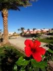 Palmen und Blumen wie aus dem Reisekatalog