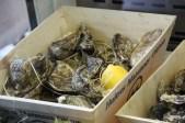 Frische Austern aus Frankreeeeisch.