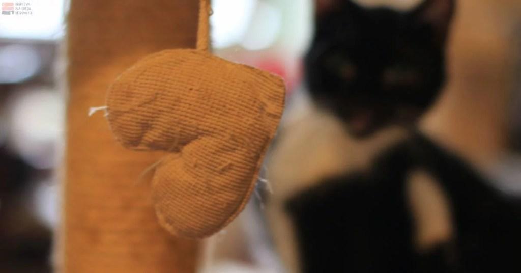 Serduszko z materiału, a tle kot.