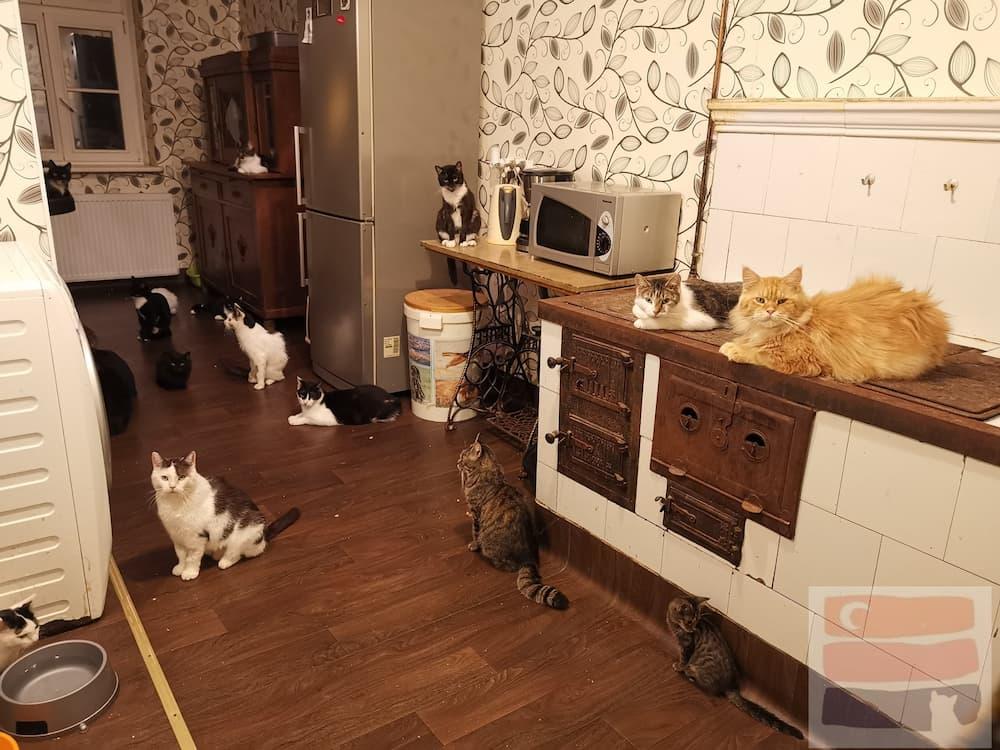 Koty siedzą w kuchni Kociego Hospicjum na stole, na piecu i na podłodze i czekają na kolację.