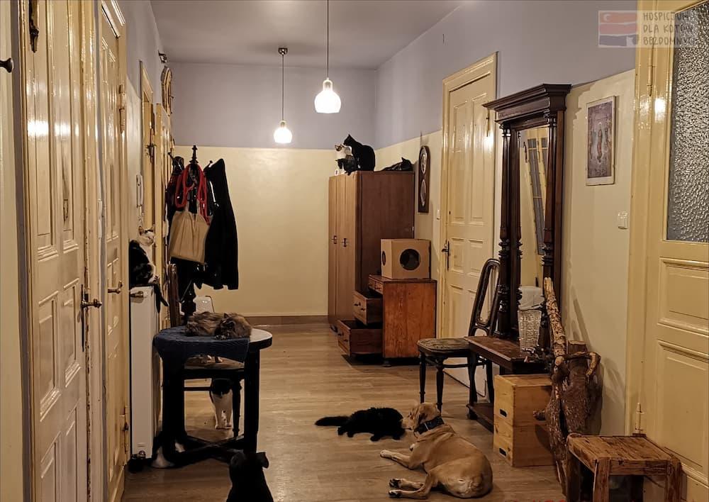 Zwierzęta w korytarzu w Kocim Hospicjum: cztery koty siedzą na szafie, jeden na kaloryferze, jeden kot na stoliku, dwa koty i pies na podłodze.