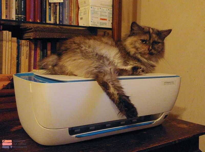 Kot leży na drukarce