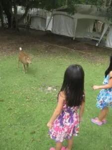 エスタテの鹿