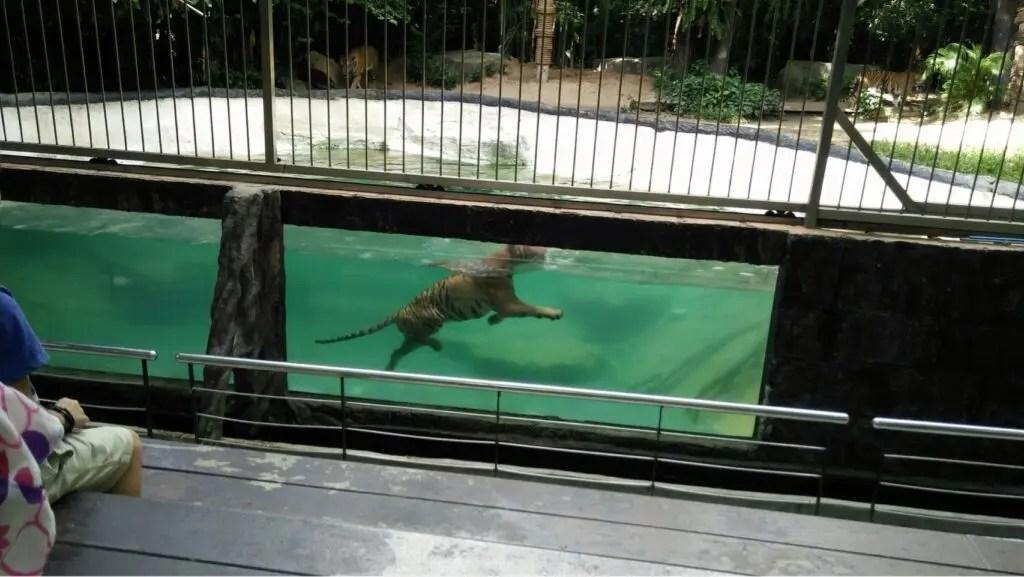カオキアオ動物園のショー