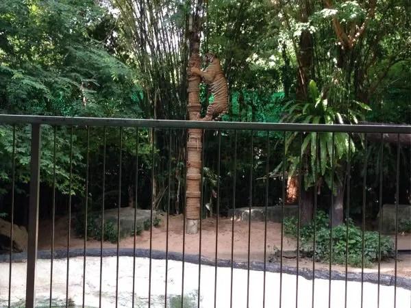 エスタテリゾート&サファリ⑥カオキアオ動物園のショーはすごい!