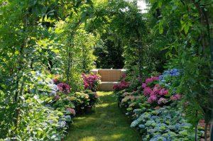 Mit Tipps vom Gartenprofi in die zweite Jahreshälfte