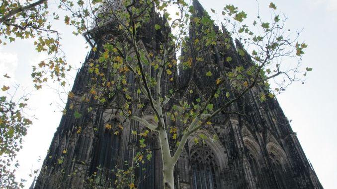 Baum mit Dom