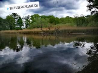 Scheuermühlenteich