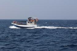 Walvis gespot! (2)