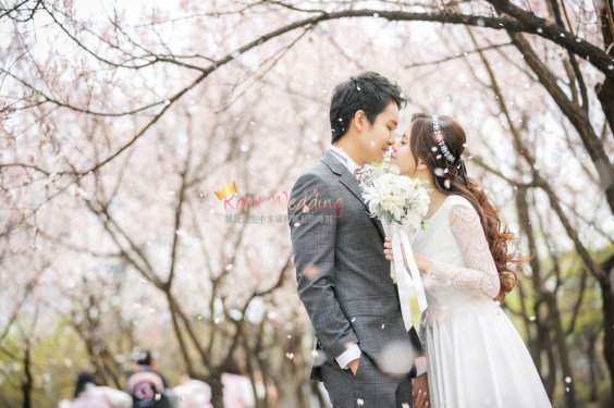 Korea Pre Wedding Cherry blossom Kohit Wedding 9