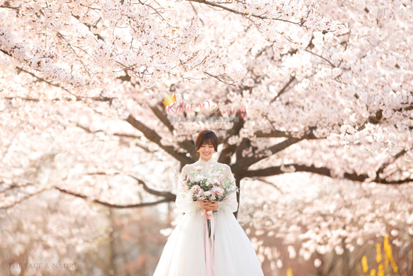 kohit-wedding-korea-pre-wedding-cherry-blossom-10