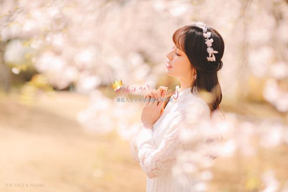 kohit-wedding-korea-pre-wedding-cherry-blossom-3