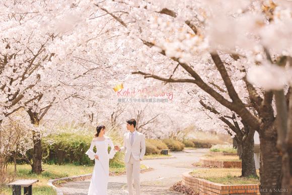 kohit-wedding-korea-pre-wedding-cherry-blossom-6