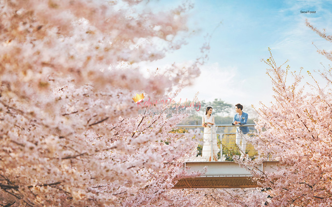 The castle yongma- Kohit wedding korea pre wedding 25