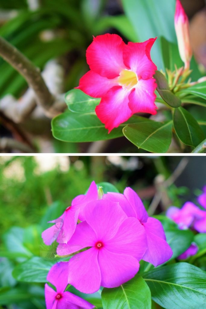 Unwind in Thailand - Smell the flowers