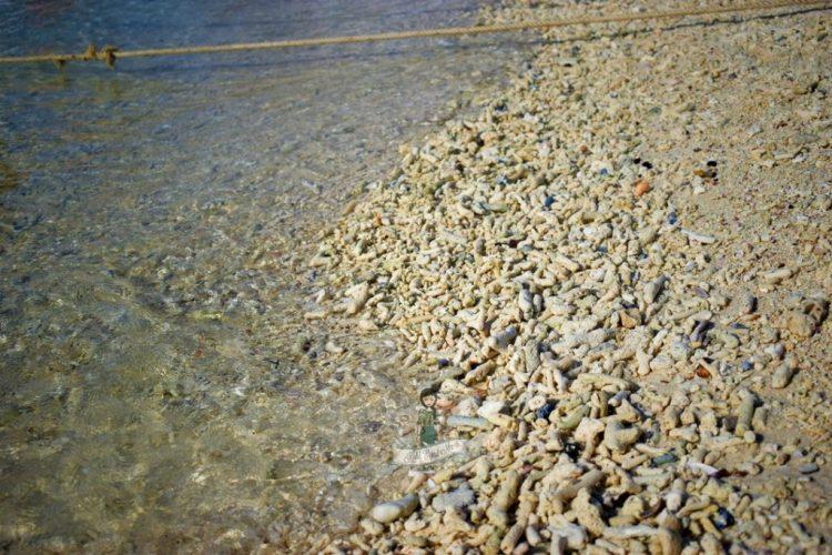 Corals at Khai Island Thailand