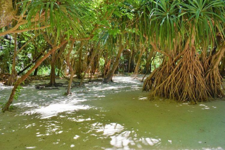 Loh Samah Bay - Maya Bay - Phi Phi Islands