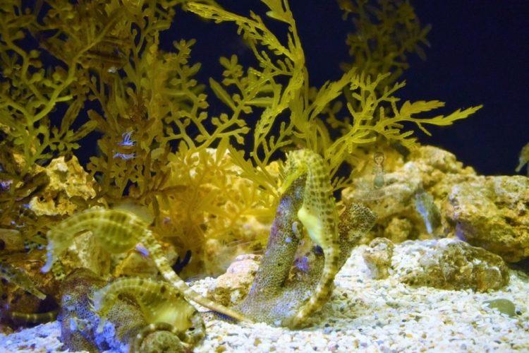 Seahorse Sealife Ocean world