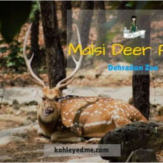 malsi deer park dehradun mussoorie - things to do in dehradun mussoorie
