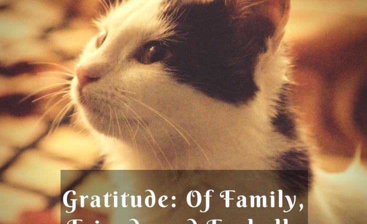 Gratitude Circle kohleyedme.com