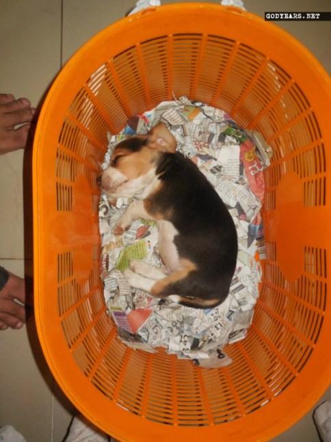 Dog sleeping position sideways